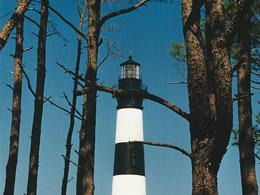C'est le phare qui cache la forêt