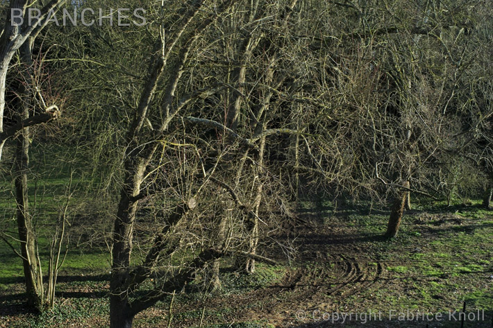 056-branches