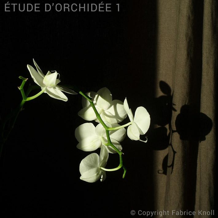 059-etude-dorchidée-1