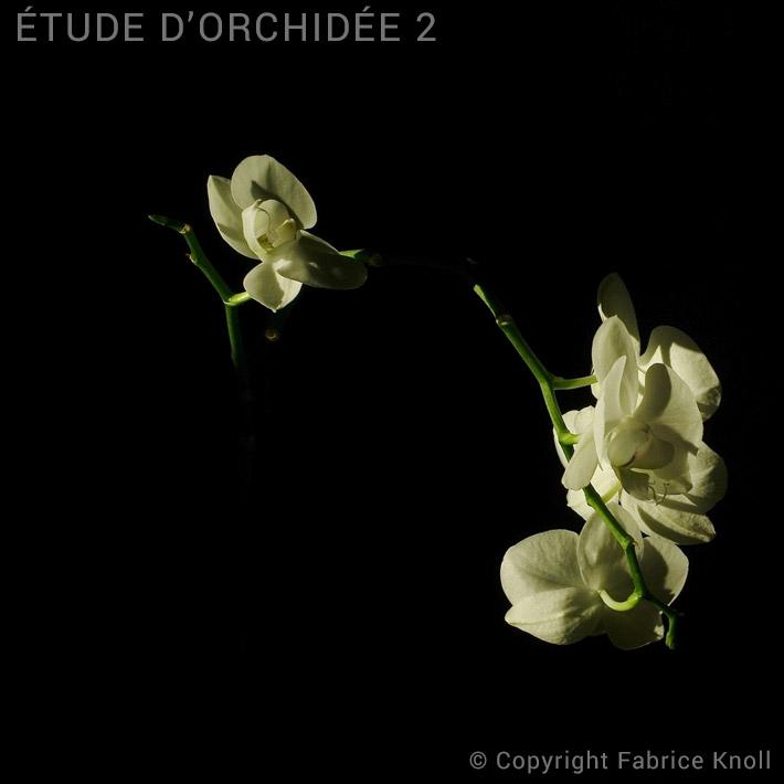 060-etude-dorchidée-2