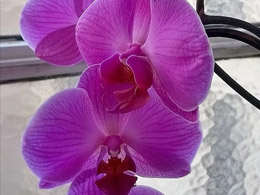 Etude d'orchidée 3